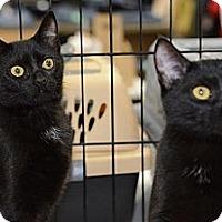 Adopt A Pet :: Bitts - Harrisburg, NC