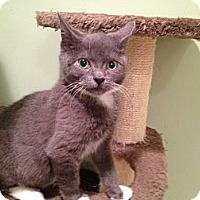 Adopt A Pet :: Fog - East Hanover, NJ