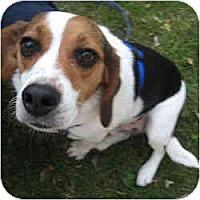 Adopt A Pet :: Morgan - Novi, MI