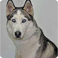 Adopt A Pet :: Star - Port Washington, NY