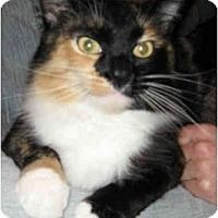 Adopt A Pet :: Georgette - Davis, CA