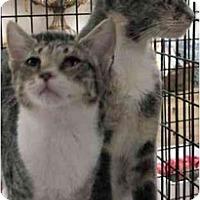 Adopt A Pet :: Rajah - Davis, CA