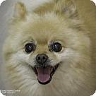 Adopt A Pet :: Teddy Bear
