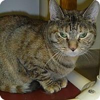 Adopt A Pet :: Cleo - Hamburg, NY