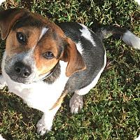 Adopt A Pet :: Peanut - Sneads Ferry, NC