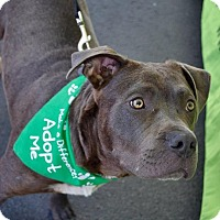 Adopt A Pet :: Tigger - San Diego, CA