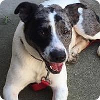 Adopt A Pet :: Jack - Joliet, IL