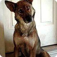 Adopt A Pet :: Jewel - Clemmons, NC