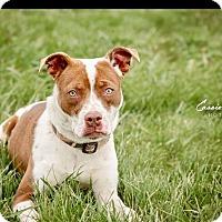 Adopt A Pet :: Mabel - Urgent! - Zanesville, OH