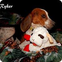 Adopt A Pet :: Ryker - Washington, PA