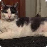 Adopt A Pet :: Madison - Sedalia, MO