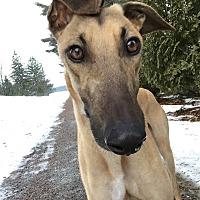 Adopt A Pet :: Diego - Swanzey, NH
