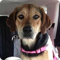 Adopt A Pet :: Lacey - ADOPTED!! - Antioch, IL