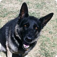 Adopt A Pet :: Sasha - Justin, TX
