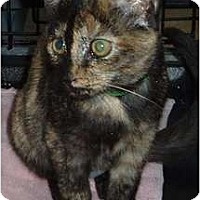 Adopt A Pet :: Patches - Westfield, MA
