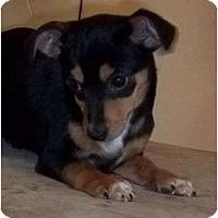 Adopt A Pet :: Unwin - P, ME