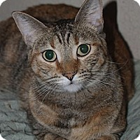 Adopt A Pet :: BRIDGET JONES - Encino, CA