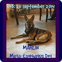 Adopt A Pet :: MARLIN - Devine, TX