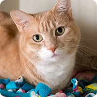 Adopt A Pet :: Isabella - Fort Collins, CO