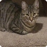 Adopt A Pet :: Jackson - Alamo, CA