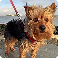 Adopt A Pet :: FREDDY - Oakland, CA