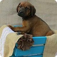 Adopt A Pet :: Demi - Joliet, IL