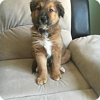 Adopt A Pet :: Jasper - Saskatoon, SK