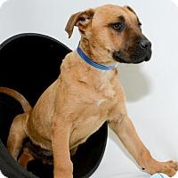 Adopt A Pet :: 453 - Aurora, CO