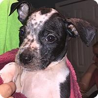 Adopt A Pet :: Luke - St Petersburg, FL