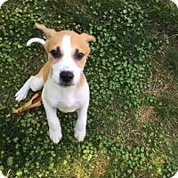 Adopt A Pet :: Jax - Barnegat, NJ