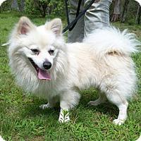 Adopt A Pet :: Walker - Canterbury, CT