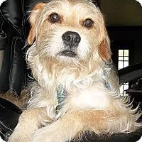 Adopt A Pet :: Rusty - Memphis, TN