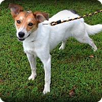 Adopt A Pet :: Lola - Hillsboro, IL