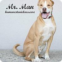 Shar Pei/Labrador Retriever Mix Dog for adoption in Modesto, California - Mr. Man