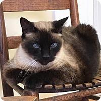 Adopt A Pet :: Mojo **Declawed** - Homewood, AL