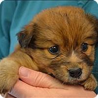 Adopt A Pet :: Tatertot - Paris, KY