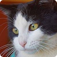 Adopt A Pet :: Dice - Sierra Vista, AZ