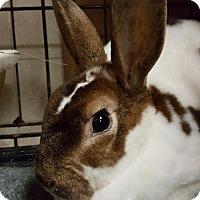 Adopt A Pet :: Luna - Holbrook, NY