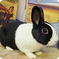Adopt A Pet :: Cara - Foster, RI