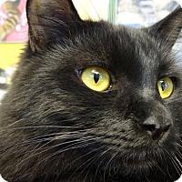 Adopt A Pet :: Fritz - Woodland Hills, CA