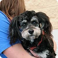 Adopt A Pet :: Teddy - Palmdale, CA