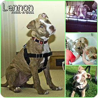 Pit Bull Terrier Mix Dog for adoption in Hillsborough, New Jersey - Lennon