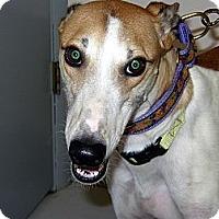 Adopt A Pet :: Meg (E's Meg) - Florence, KY