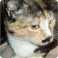Adopt A Pet :: Gabby - Westfield, MA