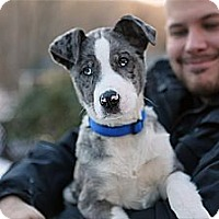 Adopt A Pet :: Murphy - Richmond, VA