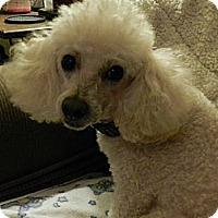 Adopt A Pet :: Tucker - Leeds, AL