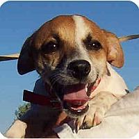 Adopt A Pet :: MILO - Phoenix, AZ