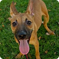 Adopt A Pet :: Lipton - Scottsdale, AZ