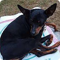 Adopt A Pet :: Daisy - McDonough, GA