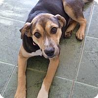 Adopt A Pet :: BETSY - Paron, AR